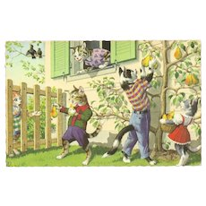 Mainzer Dressed Cat Postcard - Picking Pears
