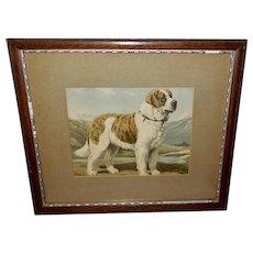 Vintage Print of a Standing Saint Bernard Dog