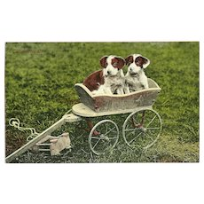 Vintage Photo Postcard of Two Puppies in a Wagon Our Motor Car