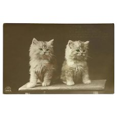 Vintage Birthday Wishes Sepia Postcard with Two White Kittens on a Bench
