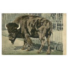 Woehler Hand Colored 1909 Photo Postcard of Buffalo