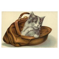 Embossed Glossy 1909 Postcard of Cat in Purse