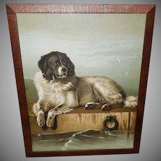 Chromolithograph of Newfoundland Dog by Sir Edwin Landseer