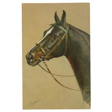 Artist Signed Vintage Stehli Postcard of Brown Horse by Rivst