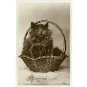 Vintage British Photo Postcard of Kitten in Basket