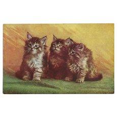 Three Kittens Vintage Postcard by MacFarlane Publishing 1907