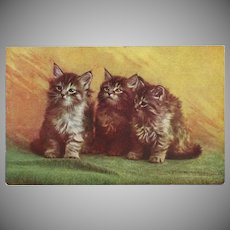 Three Kittens Vintage Postcard by MacFarlane Publishing 1907