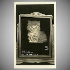 Glossy Photo Postcard of a Kitten within a Swing Frame