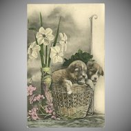 Vintage Postcard of Two Puppies in a Basket