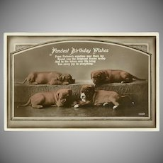 Vintage Birthday Postcard with Four Puppy Dogs