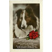 Glossy Embossed Birthday Postcard with Shepherd Dog