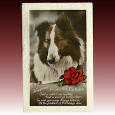Glossy Embossed Birthday Postcard with Shepherd Dog