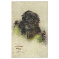 Raphael Tuck Oilette Postcard of Pekingese Puppy Dog by Maud Watson