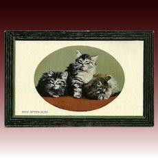 Vintage British Postcard of Three Kittens at Rest