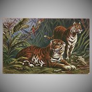 Vintage Postcard of Two Tigers and Birds by F. Perlberg