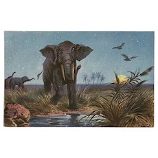 Vintage Postcard of Elephants by F. Perlberg
