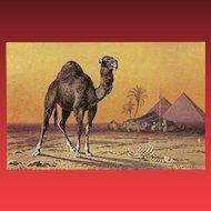 F. Perlberg Vintage Postcard of Camels in Desert
