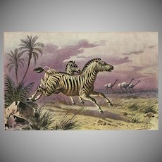 F. Perlberg Vintage Postcard of Zebras and Ostriches