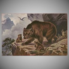 F. Perlberg Vintage Postcard of Bear and Cubs