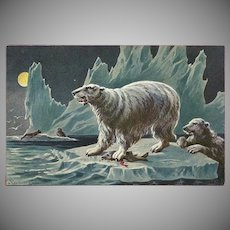 F. Perlberg Vintage Postcard of Polar Bears