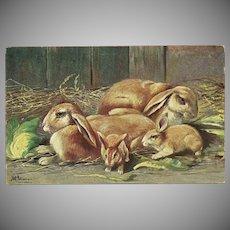 Artist Signed Undivided Postcard of Rabbits