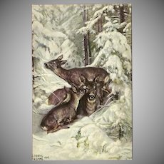 Artist Signed German Postcard of Deer and Fawns