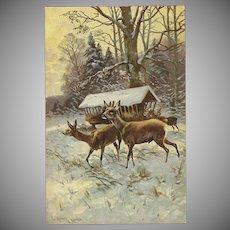 Artist Signed Vintage Postcard of Deer