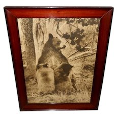 Large Sepia Photo Print of Black Bear and Cubs