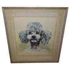 Vintage Watercolor of Poodle by Saint-Remy