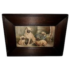 Vintage Print of Family of Pug Dogs