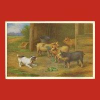 Edgar Hunt Vintage Postcard of Dog with Pigs
