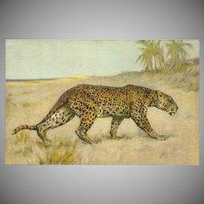 Vintage Stehli Freres Postcard of Leopard