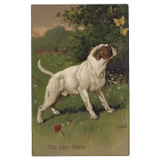 PFB Embossed Postcard of Dog and Butterflies