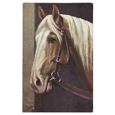 Raphael Tuck Oilette Postcard of Barbary Stallion Horse