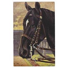 Raphael Tuck Oilette Postcard of Trakehner Stallion Horse