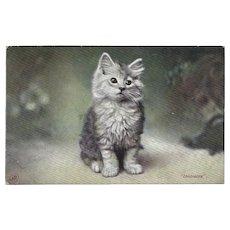Vintage Kitten Postcard Titled Innocence