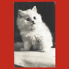 Vintage Real Photo Postcard of White Kitten