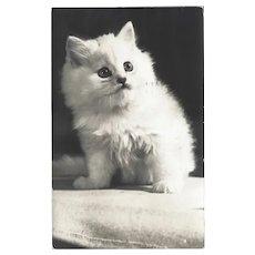Vintage Real Photo Postcard of White Kitten