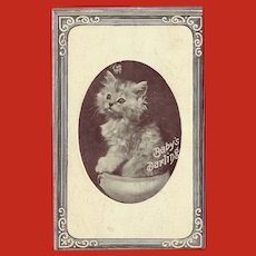 Vintage Glossy Postcard of Kitten Baby's Darling