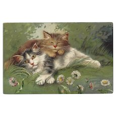 Maurice Boulanger Undivided Chromolithograph Postcard of Two Cats Relaxing