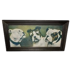Cecil Aldin Vintage Print of Three Bulldogs