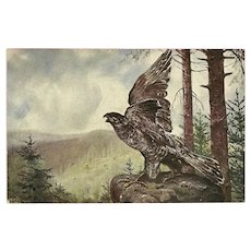 Ludwig Fromme Undivided German Postcard of Hawk