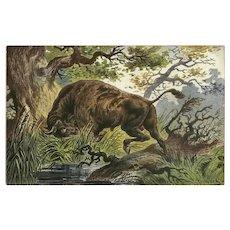 F. Perlberg Vintage Undivided Postcard of Bull