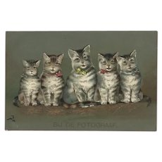Undivided Embossed 1906 Postcard of Five Cats and Kittens