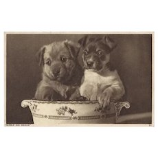 Vintage Photo Postcard of Two Dogs in Dish