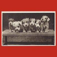 Vintage Photo Postcard of Six Puppies
