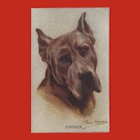 Persis Kirmse Vintage Postcard of Great Dane Dog