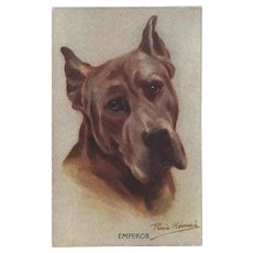 Persis Kirmse Vintage Postcard of Great Dane Dog