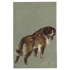 Raphael Tuck Embossed Vintage Postcard Saint Bernard Dog