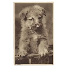Photo Postcard of Puppy Hullo Folks